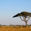 モーリシャス法人 その3 アフリカ投資へのゲートウェイ