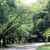 【渋谷で子育てスポット】代々木公園の100円レンタル自転車で安心して練習ができる!