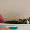 猫が箱を好きな理由は何?