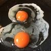 「パッタン卵」~お弁当に便利!