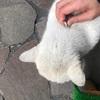 3月になったので猫達に害虫駆除薬を塗布しました
