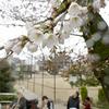 京都でも22日に桜の開花が発表!!満開は30日頃の予想!!