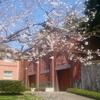 函館牛乳あいす118と桜も見れるトラピスチヌ修道院へ行ってきた!