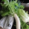 東良さんの冬野菜