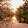 【弘前】春と夏の弘前 弘前さくらまつり・弘前ねぷたまつり【青森県】
