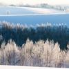 冬色パレット