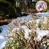 「佐久の季節便り」、晴れて、雪が融け、強雨が吹き荒れて…。