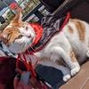 猫スポット 横浜港