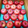 【ふるさと納税】りんごが届きました