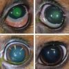 【文献紹介】同じ粘稠度の点眼なら、ヒアルロン酸添加の有無で角膜潰瘍の治癒に差は出ない?