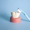 歯磨きって江戸時代から始まったみたいです。