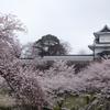 グループ旅行・桜の金沢城と兼六園