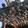 川越氷川神社に行ってきました