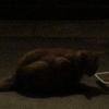 まっくら猫