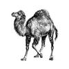 Perlが扱える全てのエンコーディングを得る方法