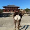 奈良市民が奈良を楽しんだ!