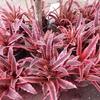 チャトゥチャック市場 〜 植物エリア