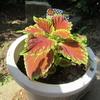 暑さを癒してくれる花々