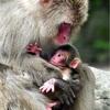 今年初の赤ちゃんザルは「ピコ」 大分、PPAPから