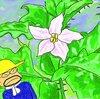 雑草のワルナスビは悪者のくせに何てきれいな花を咲かすのだ!