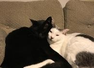 なんにもない家で、2匹の猫と暮らす。猫グッズじゃないけど役立つものたち