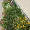 アパートの花たち3月