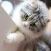 猫まとめ!秘蔵の猫写真を公開しちゃいます(ФωФ)
