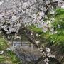 大沼親水公園の春