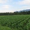 農園日誌ーむかし野菜への思いPARTⅢ