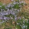 上野不忍池の桜並木がカオスだった