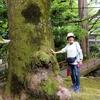 日本 背景は谷汲山華厳寺の新緑