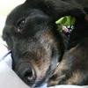 愛犬と私の星の約束~愛犬が導いてくれた『星の王子さま』や『占星術』との出会い~