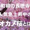 京都・出町柳の長徳寺で人気急上昇中の早咲きの桜であるオカメ桜とは