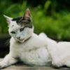 画角別に見る猫写真