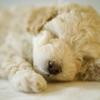 睡眠不足対策の効果は少しづつ結果が出てる。
