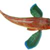 """足のような胸びれで海底を歩く?魚 """"ほうぼう ー竹麦魚ー"""""""