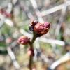芽吹きの気配。「春は既に、内側にあるもの…。」