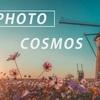 秋桜とオランダ風車:Sony α7 III + SEL24F14GM