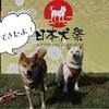 日本犬祭 2018 楽しんできました!