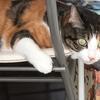 【愛猫日記】毎日アンヌさん#31