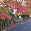 一ノ倉邸&南昌荘は紅葉が見頃!スカーレットの庭園!