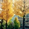 金沢市本多町石川県立図書館前黄葉