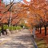 風景:新潟散歩【新潟:白山神社】