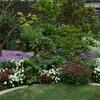 5月の中庭−2020