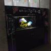 2017/5/17 テーマ水槽「梅雨を彩る アジサイの花」