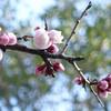 今日の景色 02/27 梅と桜