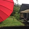 紅い傘とLIVE情報