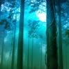 想念の森の住人たち