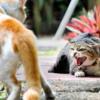 飼主の認識不足で猫は死活問題に晒される❗️