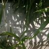 万葉歌碑を訪ねて(その352)―東近江市糠塚町 万葉の森船岡山(93)―